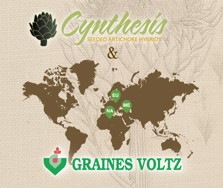 Cynthesis and Graines Voltz Partnership